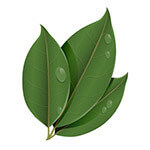queratina_vegetal